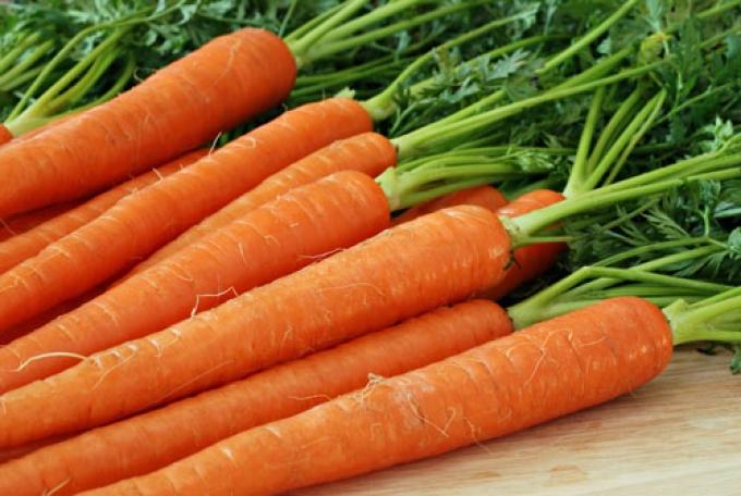 morcovi ard burta gras